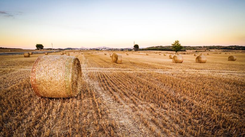 Risikobewertung: Wie sieht es in Zukunft auf den Feldern aus und was landet hier? Darüber will die EU-Kommission nun offener informieren.