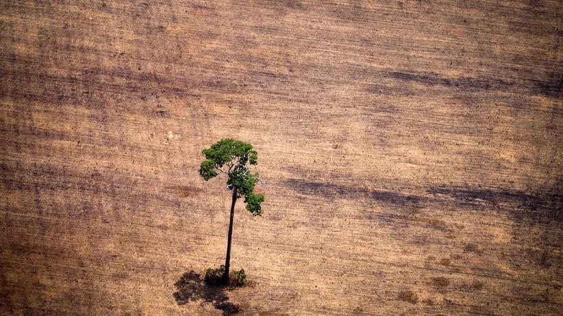 Geoengineering: Je mehr Wälder weltweit gerodet werden, desto schlechter für das Klima. Nur Bäume zu pflanzen, reicht aber nicht.