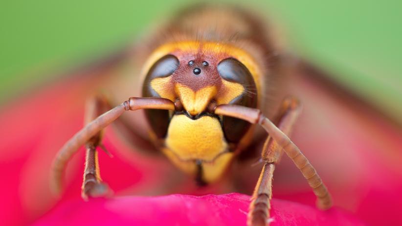 Insektensterben: Ohne Insekten bricht alles zusammen