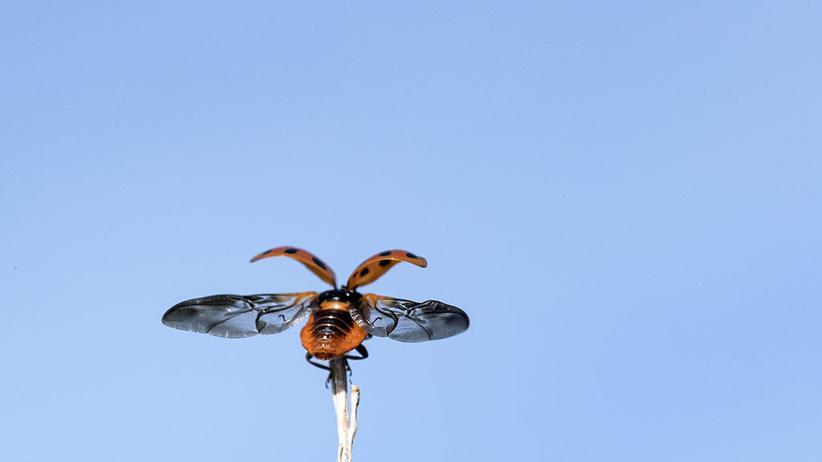Neonikotinoide: Erst Ende April hatten die EU-Staaten mit einer knappen Mehrheit für ein weitergehendes Freilandverbot der als für Insekten schädlich geltenden Neonikotinoide gestimmt.