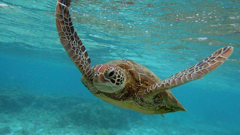 Weltschildkrötentag: Nur nicht den Kopf einziehen