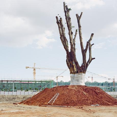 Yan Wang Preston: Mein Freund, der Baum, zieht um