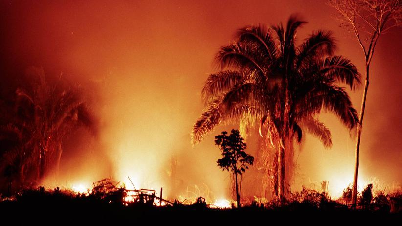 Mittelamerika: Im Lacandón Regenwald im Mexiko roden Ureinwohner den Wald.