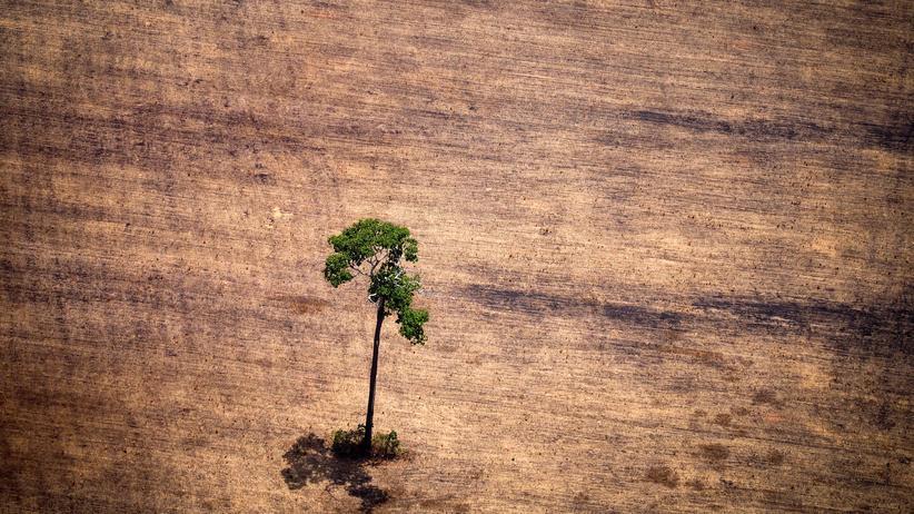 Welterschöpfungstag: Der Mensch überfordert die Erde