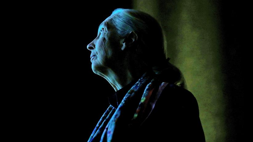 """Jane Goodall: """"Wir Menschen sind nicht die Einzigen mit Persönlichkeit"""""""
