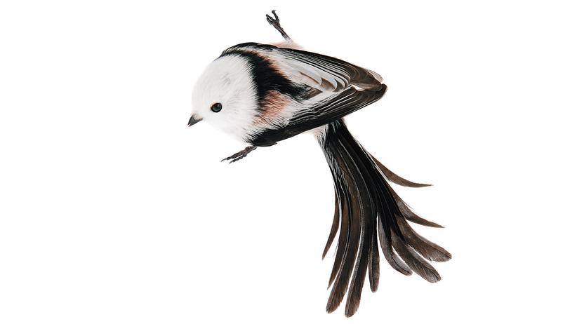 Vögel: Schau mir in die Augen, Meise