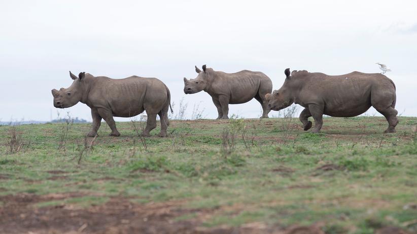 WWF: Weltweit gibt es immer weniger Wildtiere