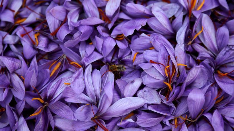 Artenvielfalt: Studie bestätigt globales Insektensterben