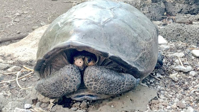 Vermeintlich ausgestorbene Riesenschildkröte lebt