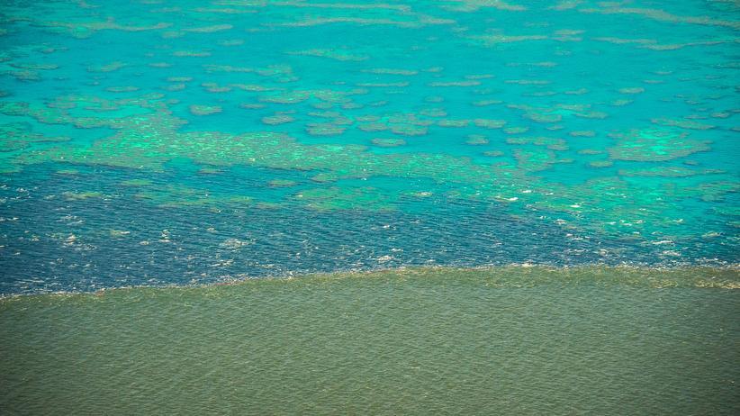 Korallenriff: Schmutziges Wasser bedroht das Great Barrier Reef