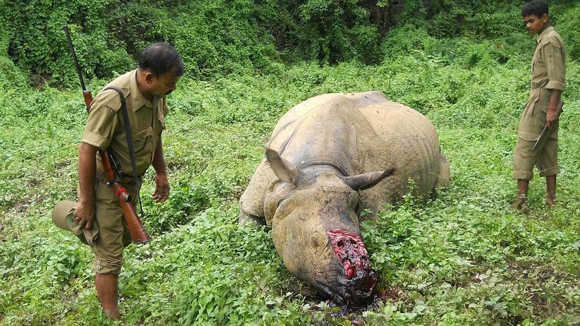 WWF: Hat der WWF Menschenrechte missachtet?