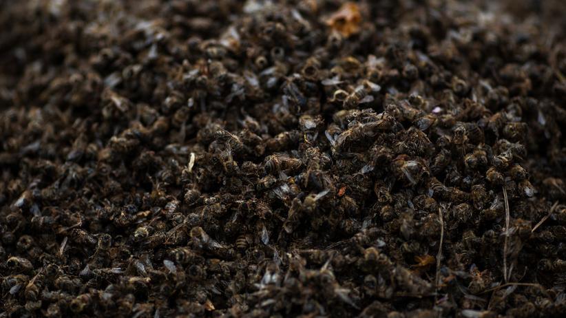 Bayer: Tote Bienen bei der Hauptversammlung