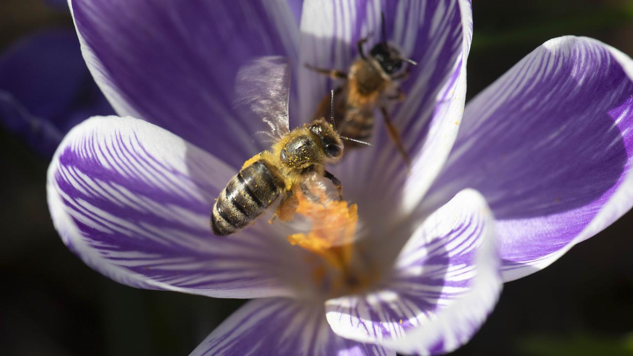 Bienen Volksbegehren