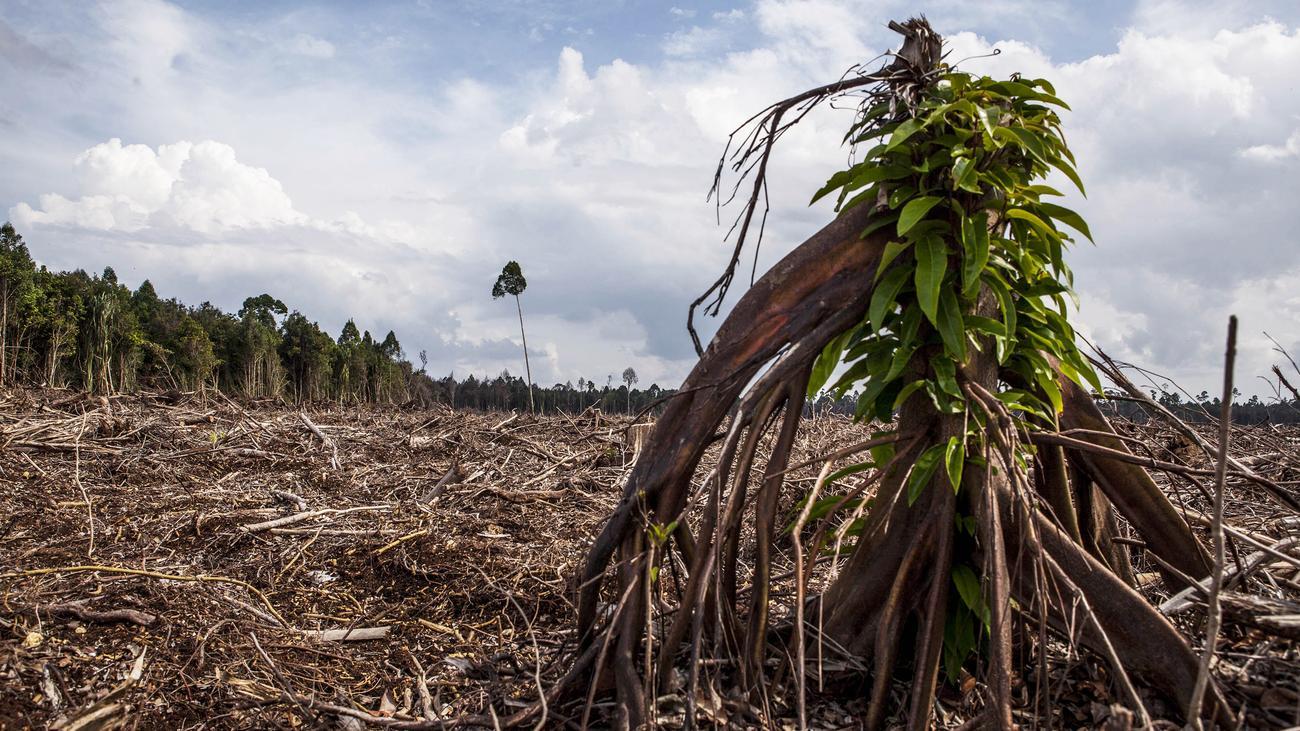 Umweltschutz: Weltweit schwinden Millionen Hektar Regenwald