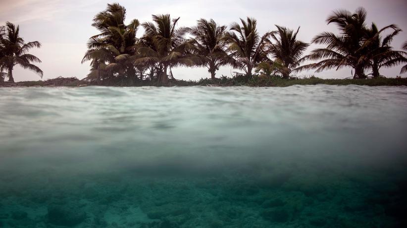 Umweltschutz: Der Meeresspiegel steigt und zerstört schon heute Lebensräume. Klimawandel und Artensterben gehören zusammen.