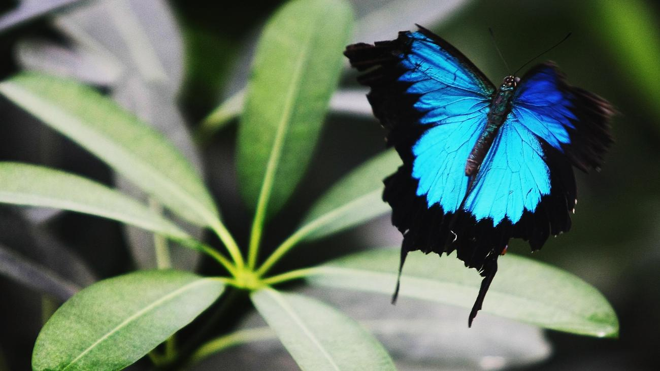 Artenvielfalt: Eine Million Arten sind vom Aussterben bedroht