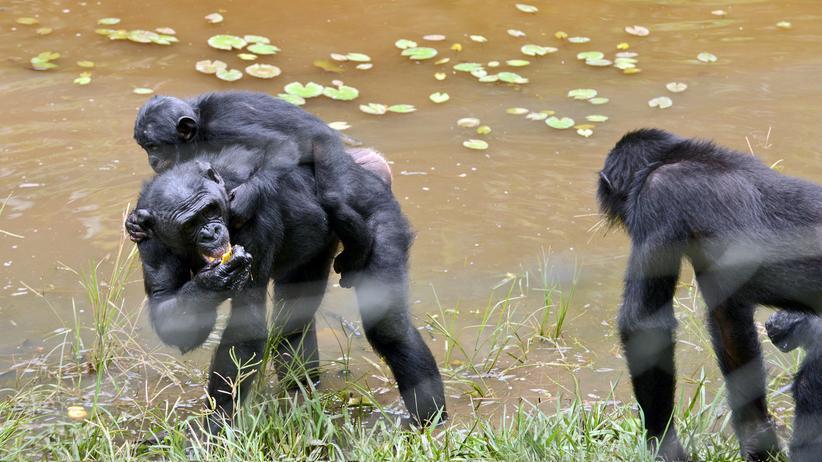 WWF: Tut die Umweltschutzorganisation genug für die Menschenrechte?