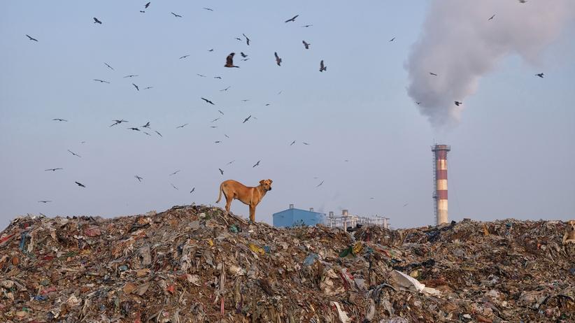 Länder scheitern an Nachhaltigkeitszielen