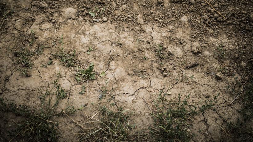 Klimapolitik: Teuer wird vor allem das Nichtstun