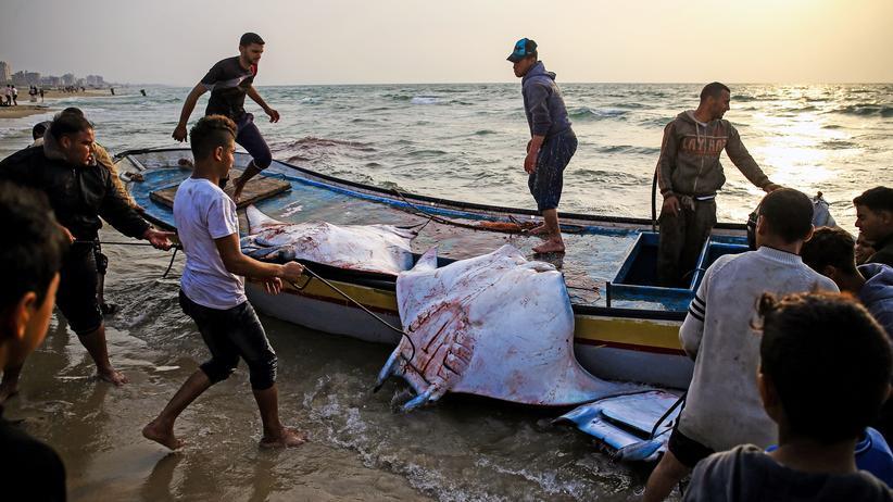 WWF: Viele Hai- und Rochenarten im Mittelmeer bedroht