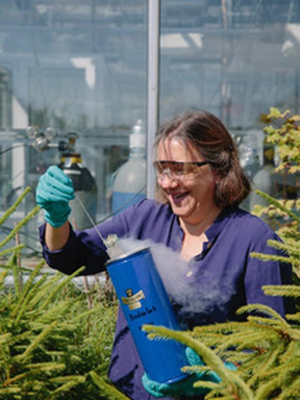 Susan Trumbore: Die Geochemikerin Susan Trumbore erforscht den Kreislauf aus der Atmung der Bäume, ihrem Wachstum und der Erdatmosphäre.
