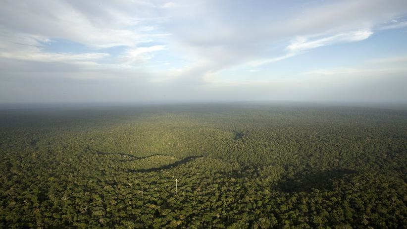 Brasiliens Regenwald brennt