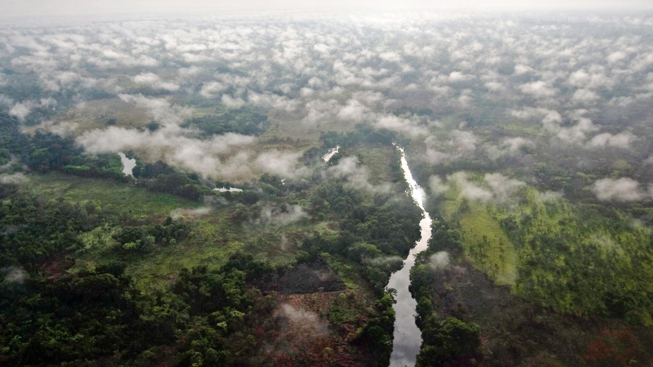 Klimawandel: Afrikas Tropenwälder stoßen unerwartet viel CO2 aus