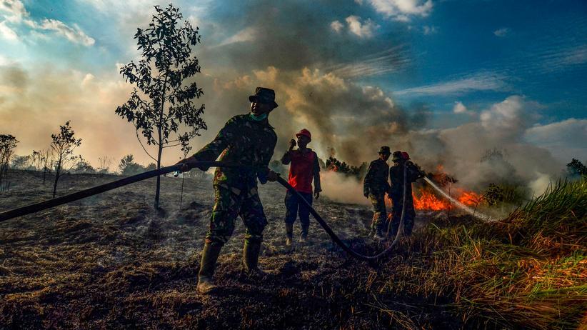 Waldbrände: Löscharbeiten auf einer Palmölplantage auf der Insel Sumatra.