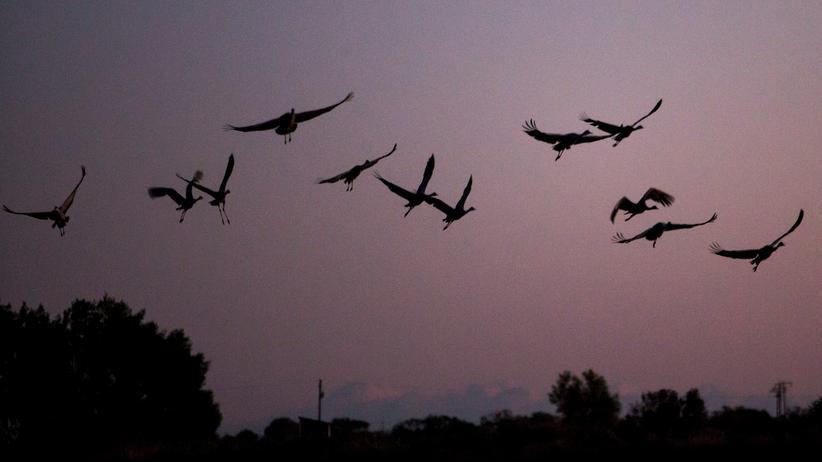 Drei Milliarden Vögel seit 1970 verschwunden