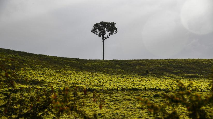Brasilien: Abholzung im Amazonasgebiet um 93 Prozent angestiegen