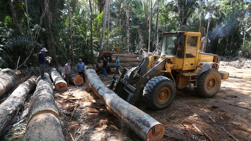 Brasilien: So viel Regenwald zerstört wie seit elf Jahren nicht mehr