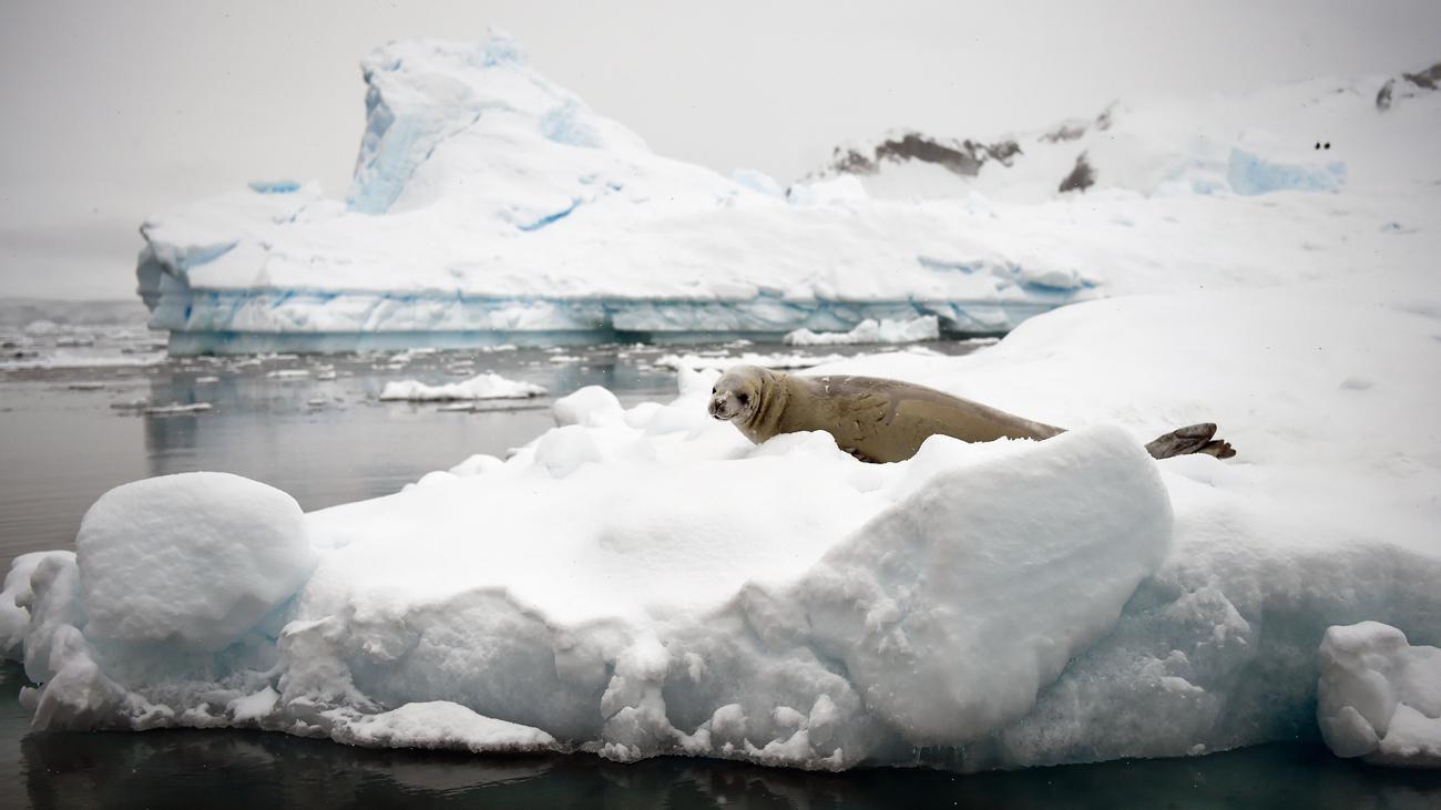 Umweltschutz: Verhandlungen über Schutzzone in der Antarktis gescheitert