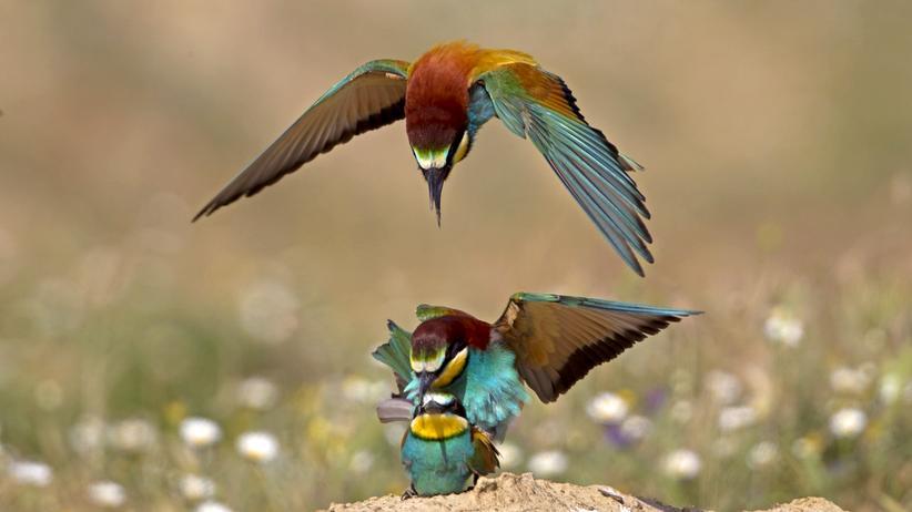 Vögel in Deutschland: Das Sterben vom Lande