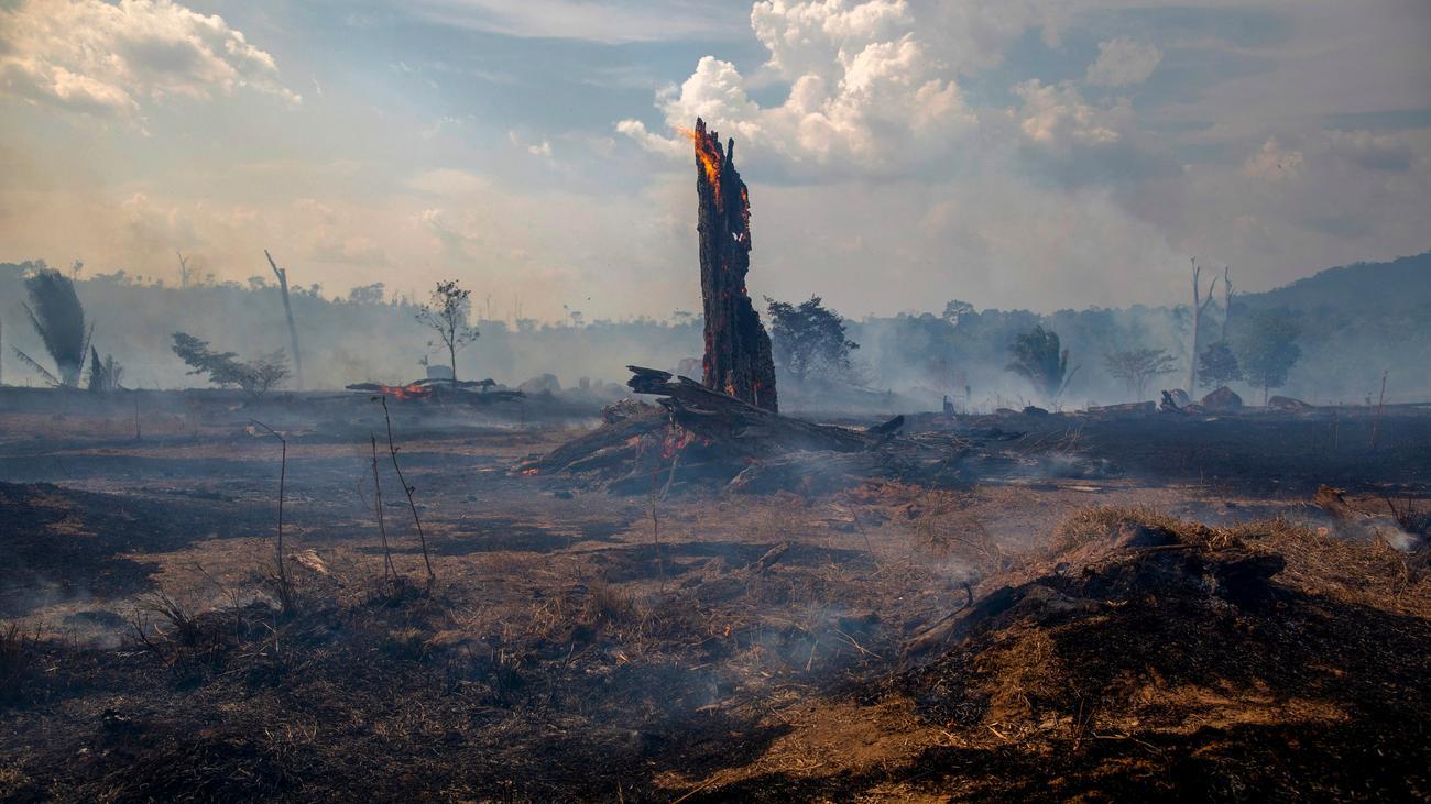 Feuer amazonas regenwald
