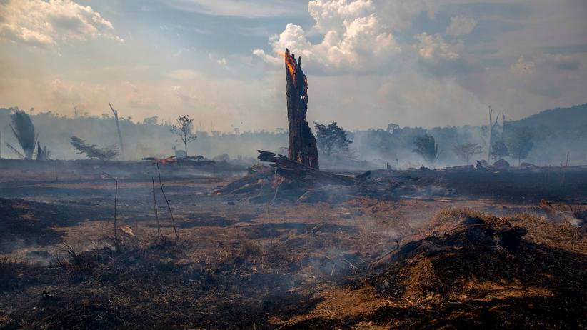 Brasilianischer Amazonas: Viele Flächen des Regenwaldes wurden abgebrannt.