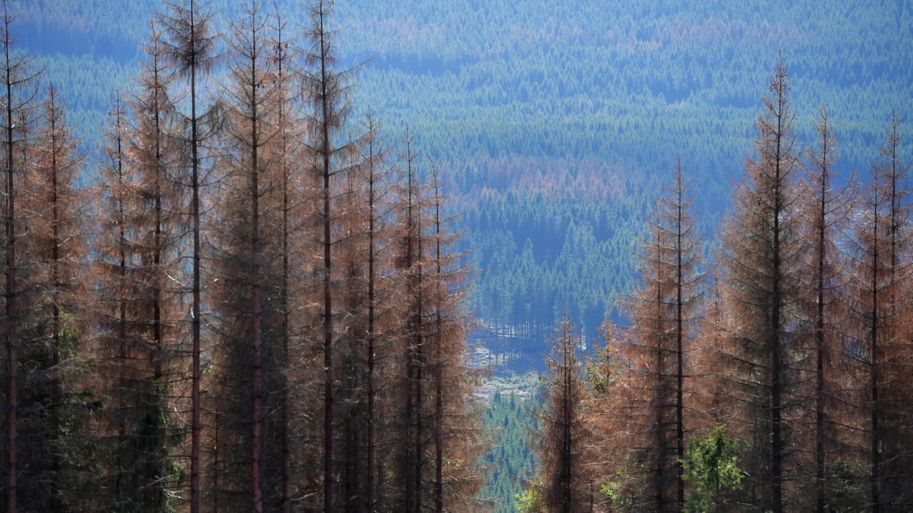 Dürremonitor: Meteorologen warnen vor Dürre in Deutschland