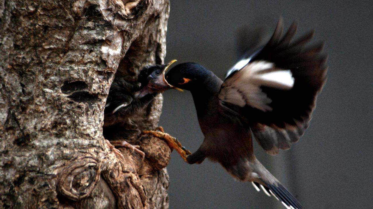 Wildtierbestände schrumpfen nicht so stark wie befürchtet