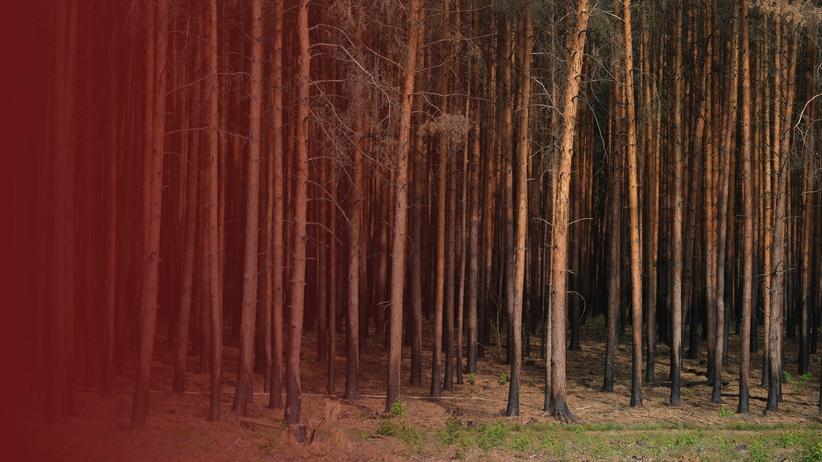 Waldbrände in Deutschland: Im Grünen zu leben heißt, mit Feuer zu leben