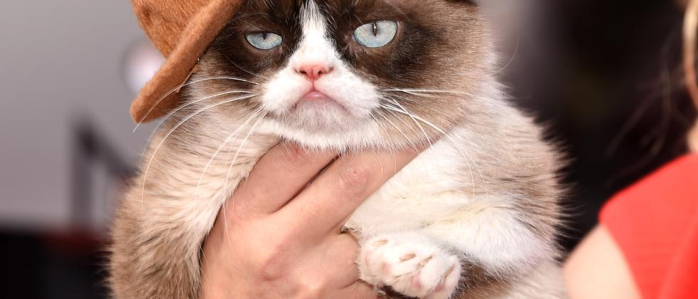 Grumpy Cat bei den MTV Movie Awards 2014