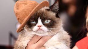 Grumpy Cat bei den MTV Movie Awards 2014