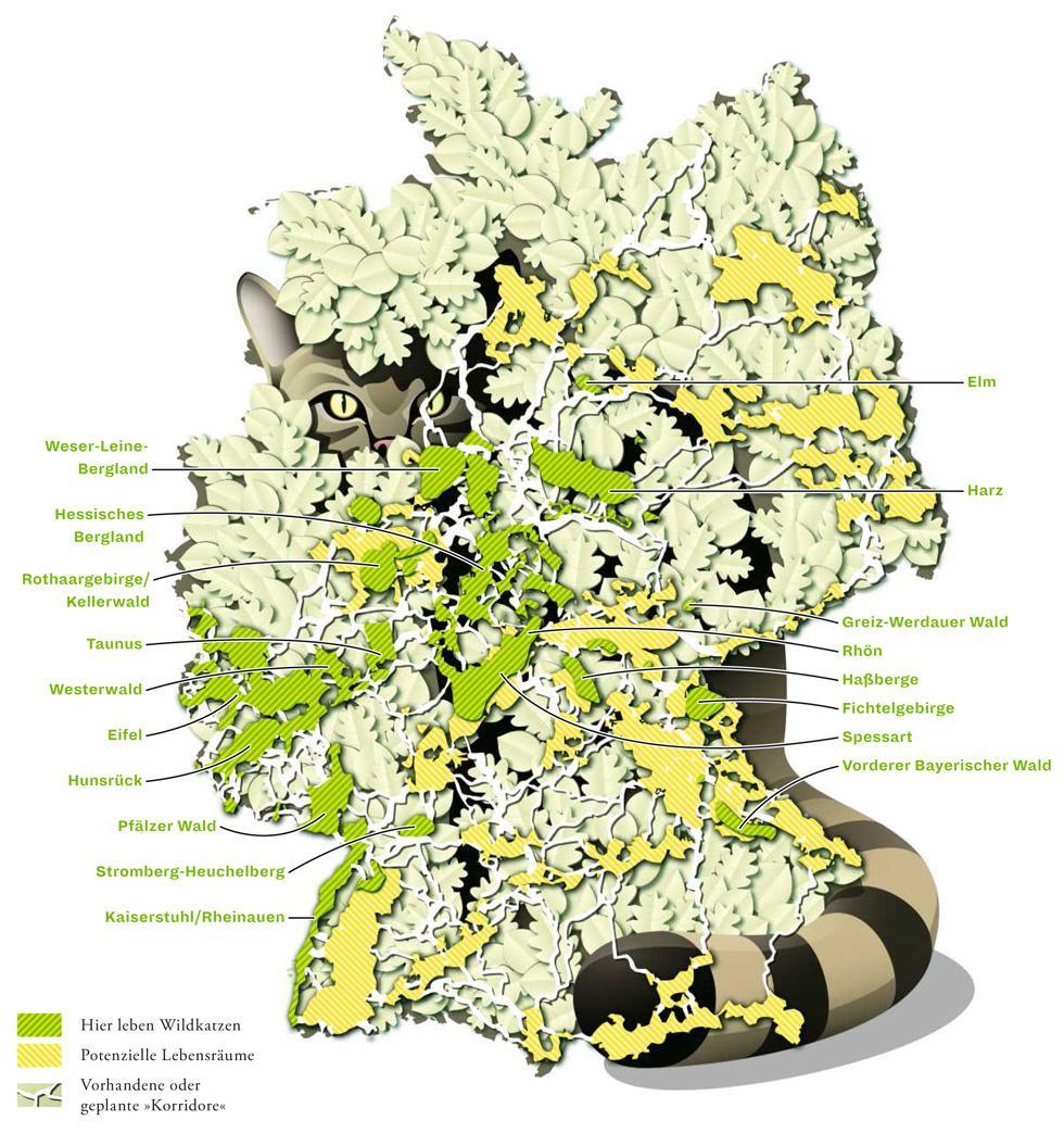 Deutschlandkarte: Wo leben Wildkatzen