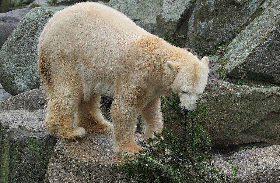 Berliner Zoo Ethikkommission Tier Tierhaltung Geburt Protest