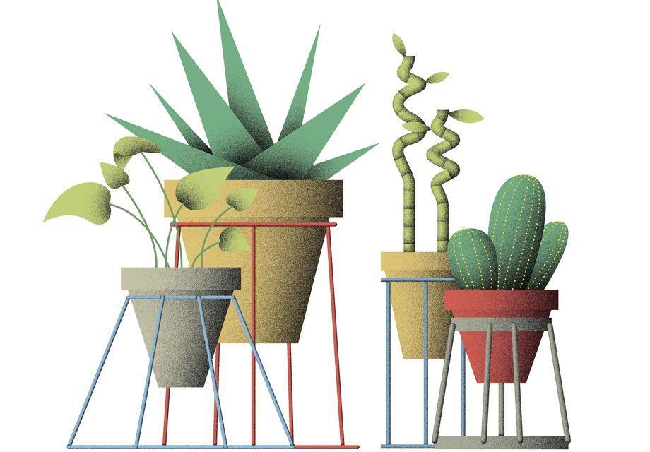 Zeit Magazin, Die Wundertüte, Pflanze, DIY, Blog