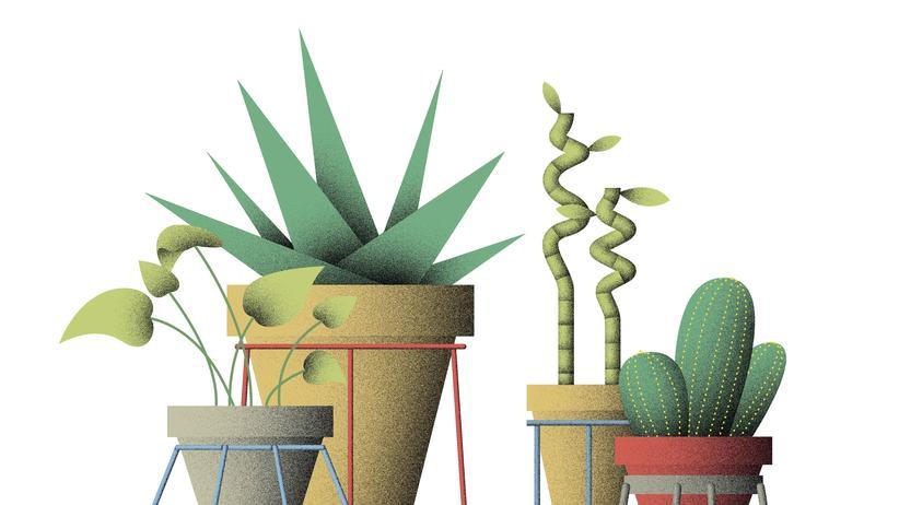 Selbermachen: Auch Blumen wollen hoch hinaus