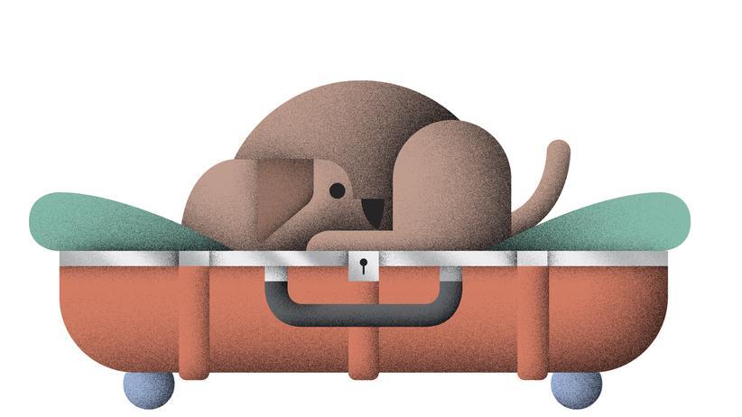 Basteln: Das mobile Hundehotel