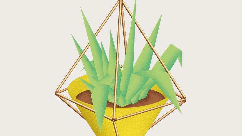 Pflanzen: Hängende Töpfe