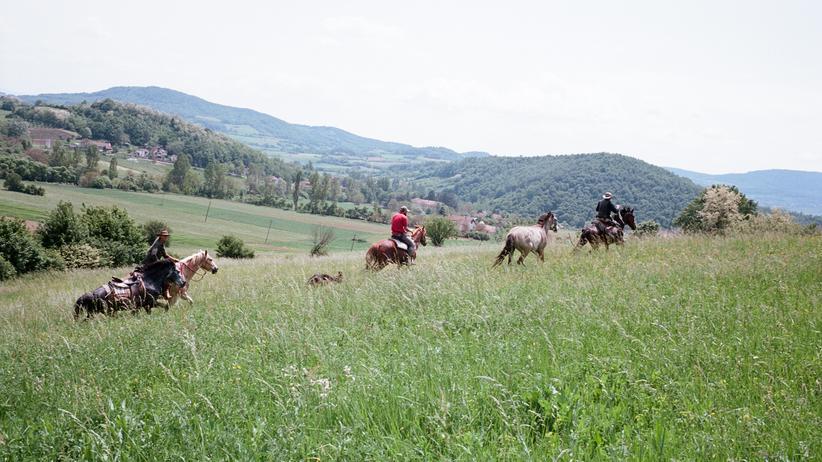 documenta-kunstfestival-pferde-athen-kassel-aufmacher