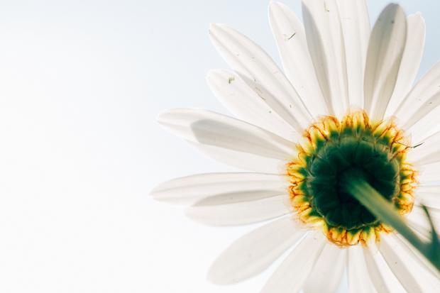 Kunstblumen: Ist das Kunst, oder muss man das gießen?