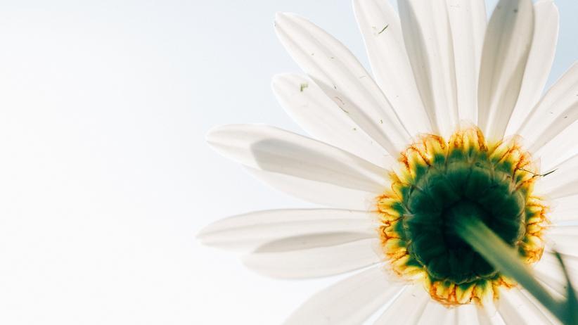 Kunstblumen: Natürlich falsch!