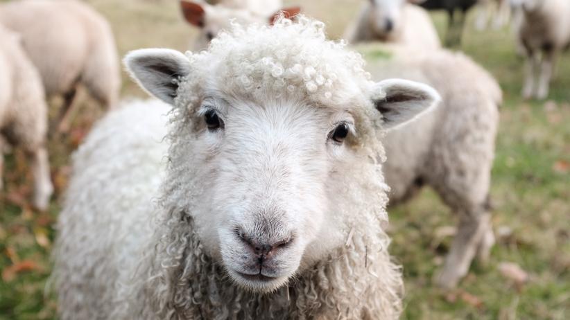 Vegan leben: Mein erstes Jahr als Veganer